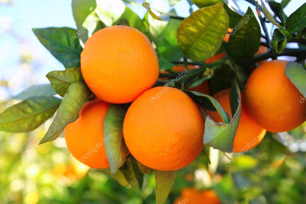 Fruit spillemaskine–426625